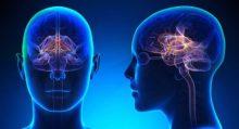 Efectos de las nuevas tecnologías de la información y la comunicación sobre el cerebro y los procesos cognitivos.